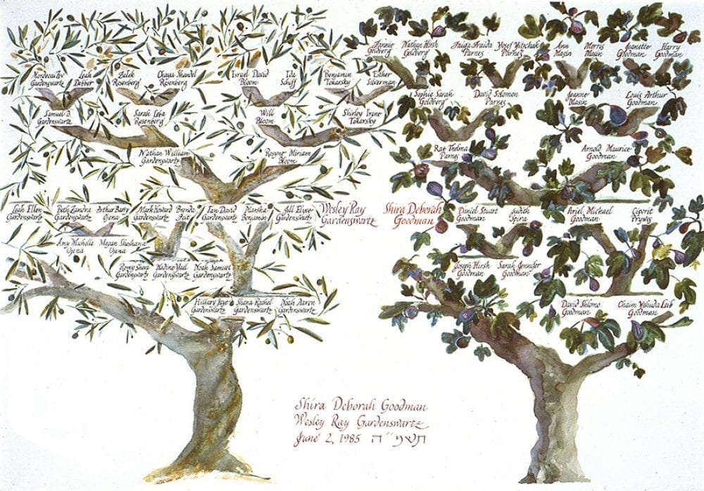 family-tree-fig-olive